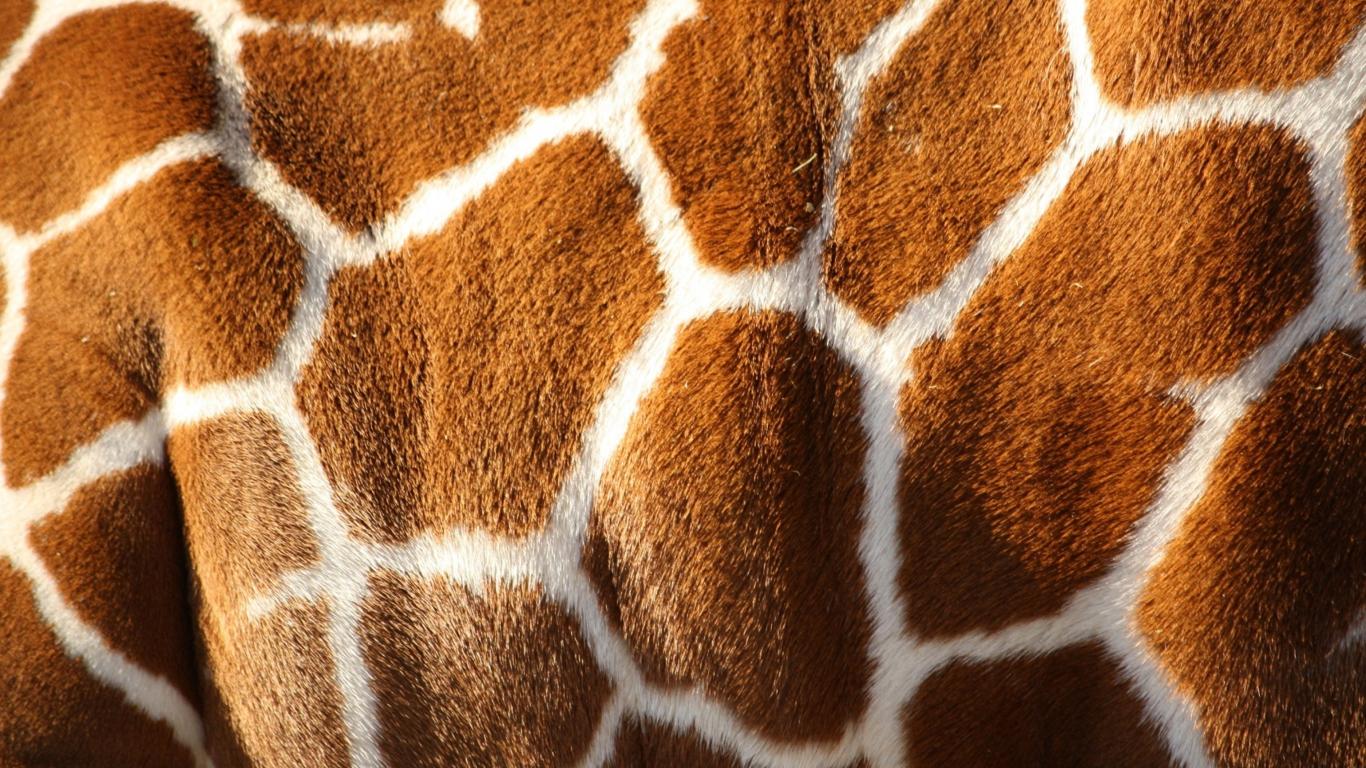 Fotos de animales de piel desnuda 29