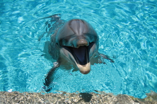 Happy Dolphin Picture for Android, iPhone and iPad