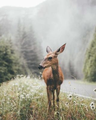 Deer doe - Obrázkek zdarma pro Nokia X7