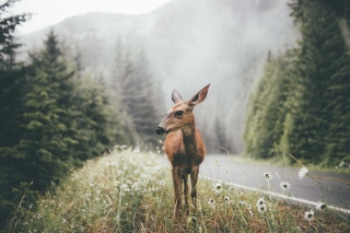 Deer doe Wallpaper for Android, iPhone and iPad