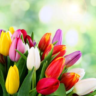 Bouquet of colorful tulips - Obrázkek zdarma pro 128x128