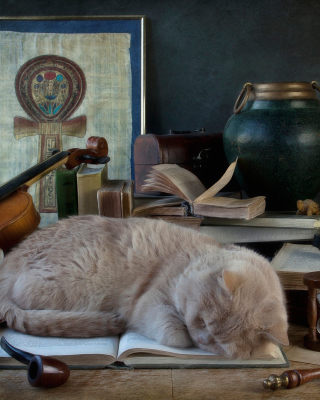 Sleeping Cat - Obrázkek zdarma pro Nokia C-5 5MP