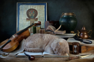 Sleeping Cat sfondi gratuiti per cellulari Android, iPhone, iPad e desktop