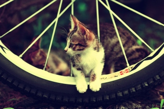 Cat And Tire Wallpaper for Android, iPhone and iPad