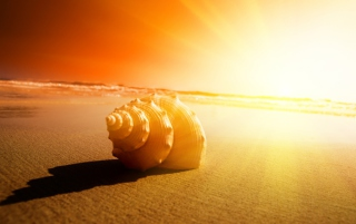 Shell On Beach Wallpaper for Android, iPhone and iPad