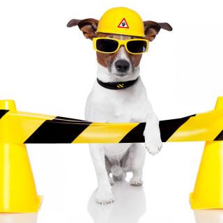 Working Dog - Obrázkek zdarma pro 1024x1024