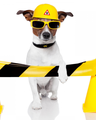 Working Dog - Obrázkek zdarma pro Nokia C3-01 Gold Edition