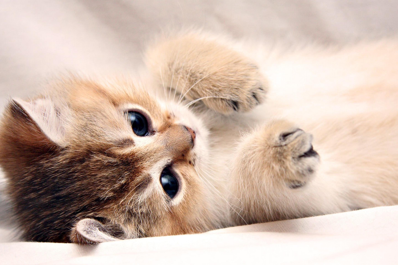 обои для рабочего стола кошки самые лучшие и няшных № 170144 загрузить