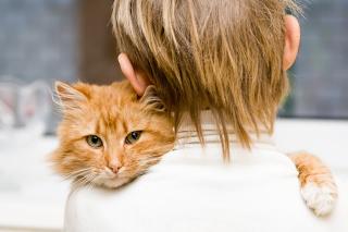 I Love My Cat - Obrázkek zdarma pro 1920x1080