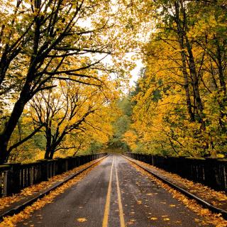 Wet autumn road - Obrázkek zdarma pro iPad