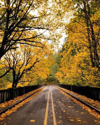 Wet autumn road - Obrázkek zdarma pro iPhone 4S