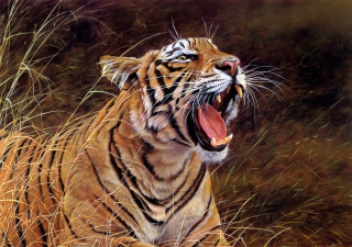 Free Tiger In The Grass Picture for Android, iPhone and iPad