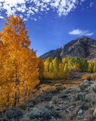 Wonderful mountain landscape - Obrázkek zdarma pro Nokia Asha 306
