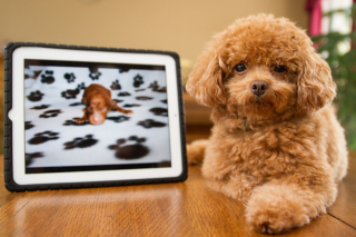 Free Plush Brown Dog Picture for Android, iPhone and iPad