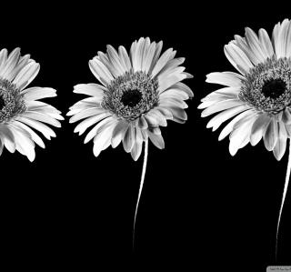 Gerbera Flowers - Obrázkek zdarma pro 2048x2048
