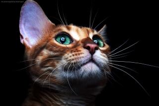 Sad Kitten sfondi gratuiti per cellulari Android, iPhone, iPad e desktop