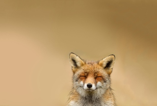Funny Fox Smile Background for Android, iPhone and iPad
