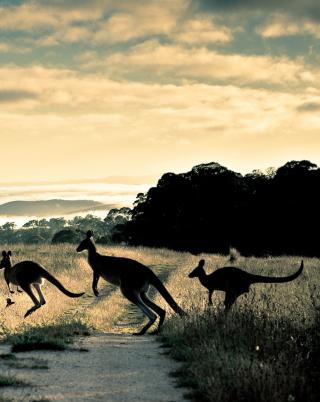 Kangaroo - Obrázkek zdarma pro Nokia C2-06