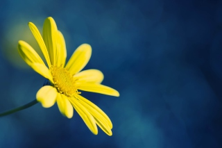 Yellow Flower On Blue Background Wallpaper for Android, iPhone and iPad