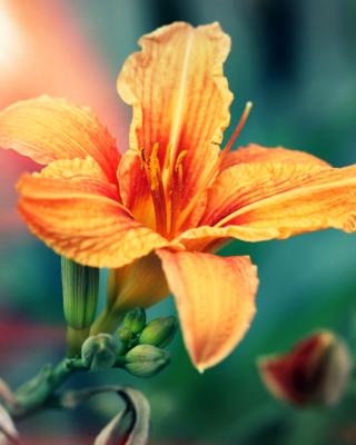 Orange Lily - Obrázkek zdarma pro Nokia X7