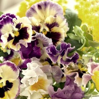 Flowers Pansies - Obrázkek zdarma pro iPad mini