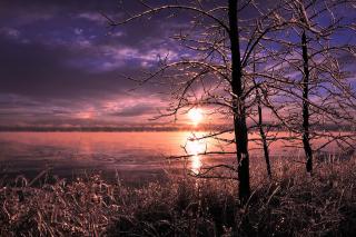 Картинка Frozen Trees near Lake in Canada получи телефон с гербом 0280x720