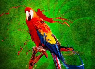 Free Big Parrot In Zoo Picture for Android, iPhone and iPad