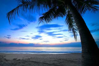Caribbean Beach - Obrázkek zdarma pro LG Optimus L9 P760