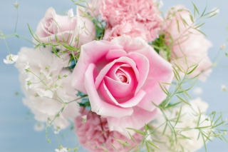 Beautiful Pink Rose Wallpaper for Android, iPhone and iPad