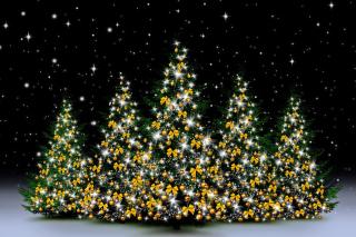 Christmas Trees in Light sfondi gratuiti per cellulari Android, iPhone, iPad e desktop