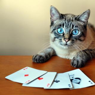 Cat The Winner - Obrázkek zdarma pro 128x128