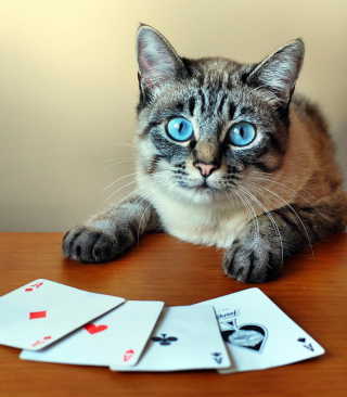 Cat The Winner - Obrázkek zdarma pro Nokia X7