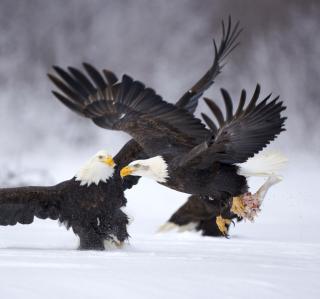 Two Eagles In Snow - Obrázkek zdarma pro 208x208