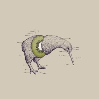Kiwi Bird - Obrázkek zdarma pro iPad Air