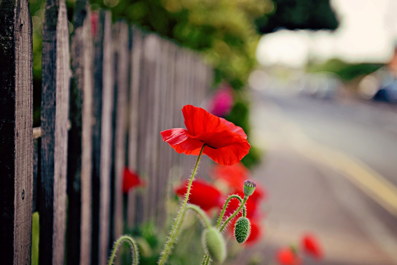 Забор цветы  № 2488849 бесплатно