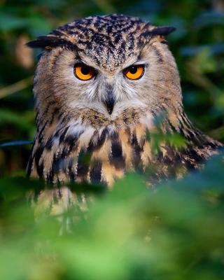 Owl - Obrázkek zdarma pro 768x1280