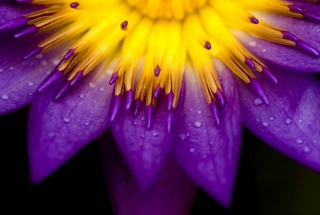 Yellow And Violet Flower Picture for Android, iPhone and iPad