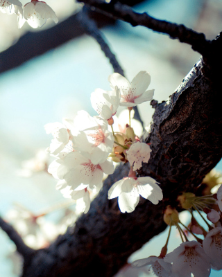 Bloom Tree - Obrázkek zdarma pro iPhone 4