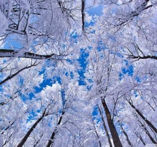 Winter Trees - Obrázkek zdarma pro iPad 2