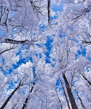 Winter Trees - Obrázkek zdarma pro Nokia Asha 202