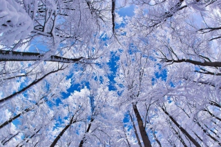 Winter Trees - Obrázkek zdarma pro HTC One