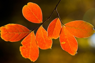 Free Bright Autumn Orange Leaves Picture for Android, iPhone and iPad