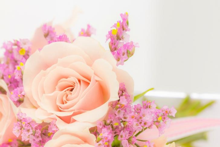 Pink rose bud wallpaper