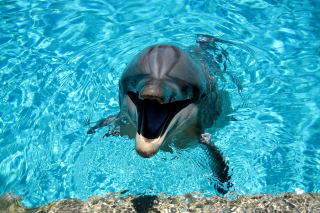 Dolphin Smile Background for Android, iPhone and iPad