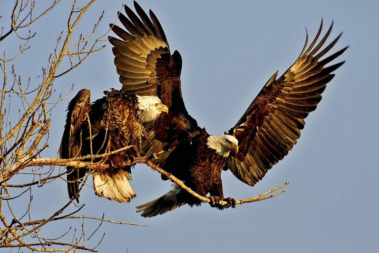 птица ветка клюв крылья  № 1996093 загрузить