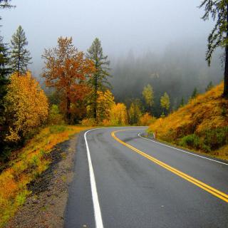 Autumn Sodden Road - Obrázkek zdarma pro iPad mini 2