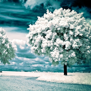 Infrared Trees - Obrázkek zdarma pro iPad 3