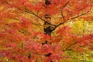 Картинка Autumn Leaves чтобы телефона 0280x720