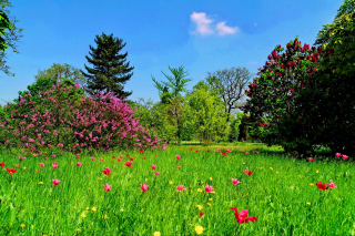 Free Green Lawn Picture for Android, iPhone and iPad