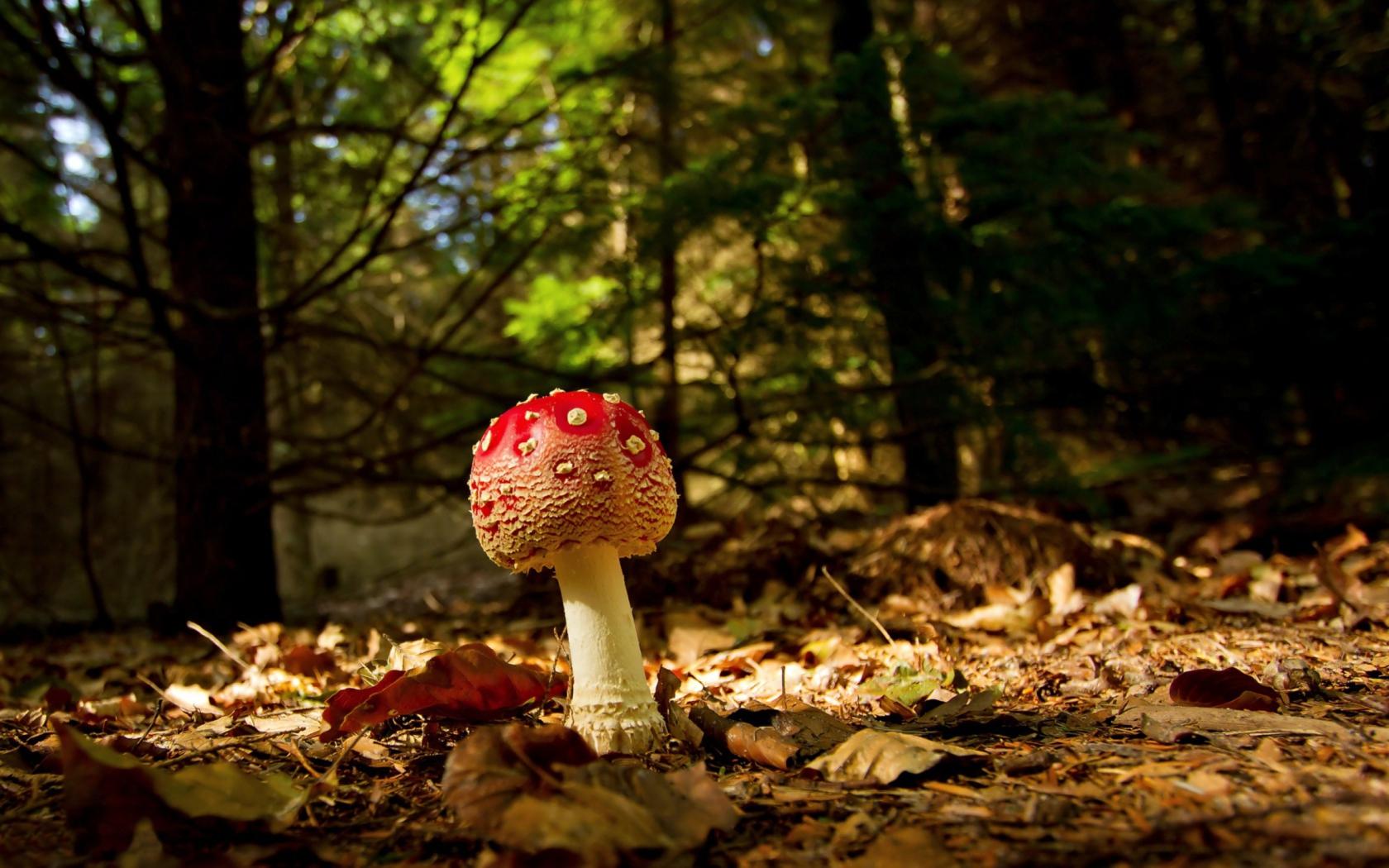 Прозрачный гриб  № 3337700 загрузить